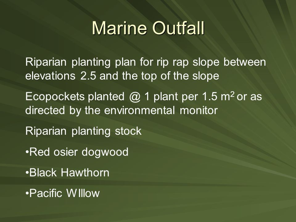 Marine Outfall Riparian planting plan for rip rap slope between elevations 2.5 and the top of the slope Ecopockets planted @ 1 plant per 1.5 m 2 or as directed by the environmental monitor Riparian planting stock Red osier dogwood Black Hawthorn Pacific WIllow