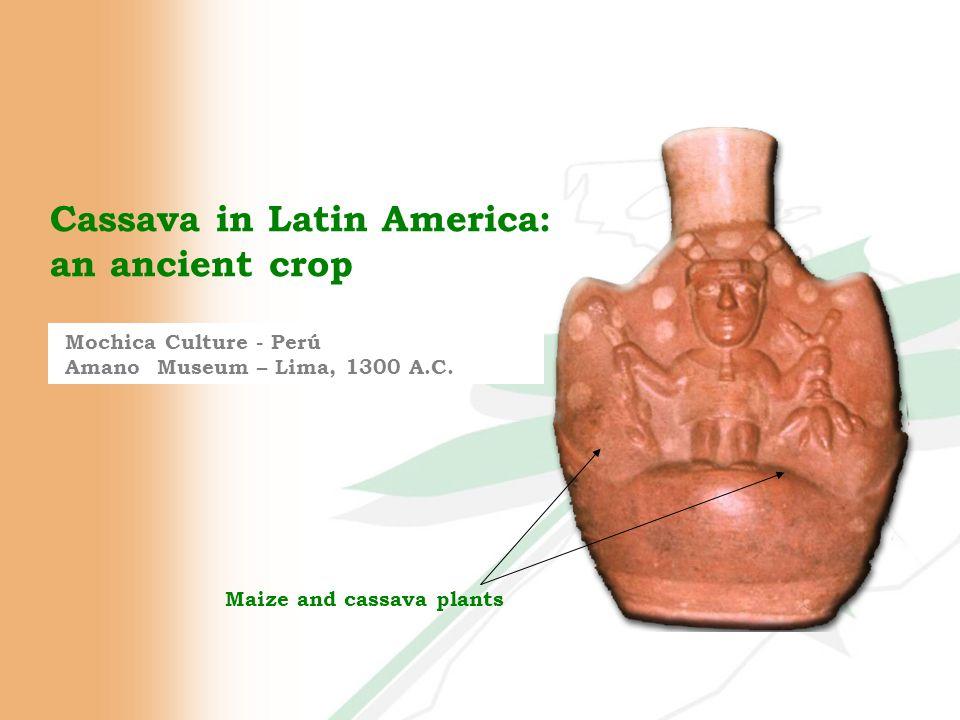 Cassava in Latin America: an ancient crop Mochica Culture - Perú Amano Museum – Lima, 1300 A.C.