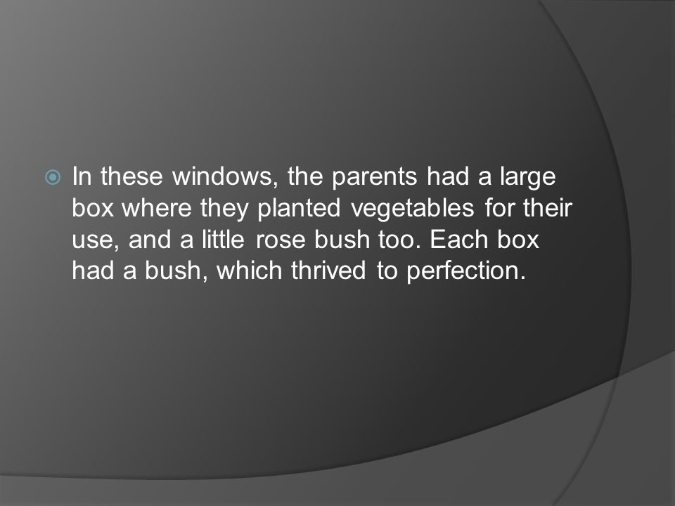  In these windows, the parents had a large box where they planted vegetables for their use, and a little rose bush too. Each box had a bush, which th