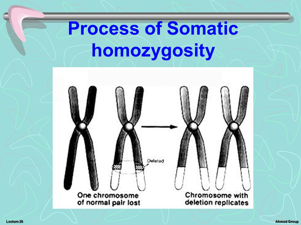 Ahmed Group Lecture 26 Process of Somatic homozygosity
