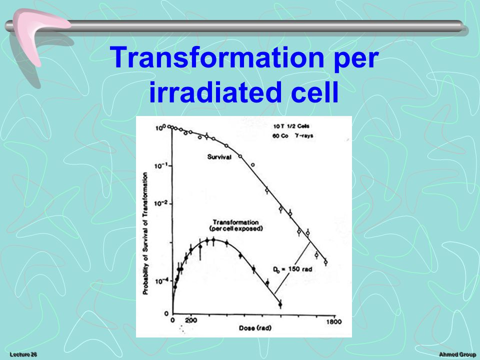 Ahmed Group Lecture 26 Transformation per irradiated cell