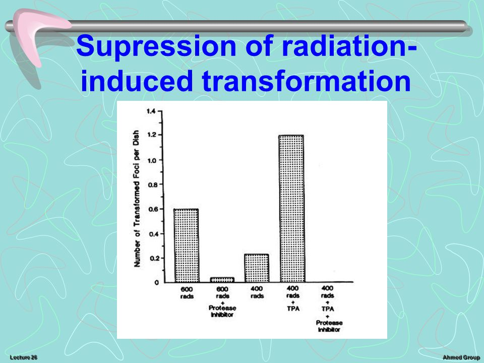 Ahmed Group Lecture 26 Supression of radiation- induced transformation