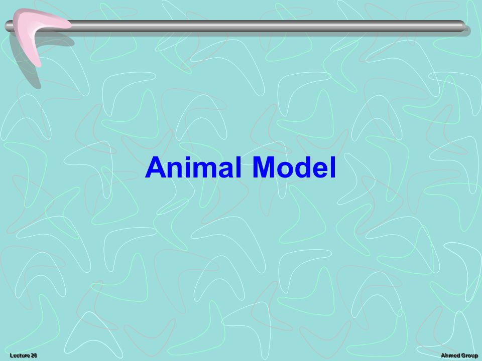 Ahmed Group Lecture 26 Animal Model
