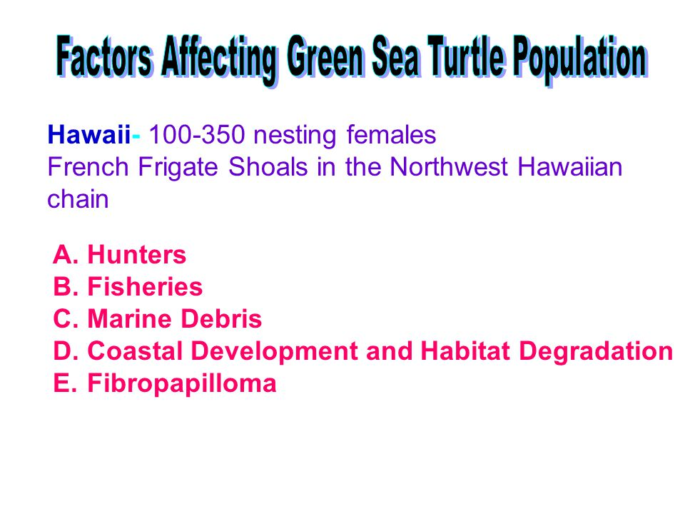 Hawaii- 100-350 nesting females French Frigate Shoals in the Northwest Hawaiian chain A.Hunters B.Fisheries C.Marine Debris D.Coastal Development and