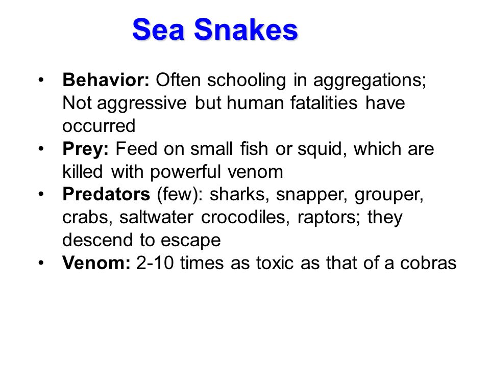 Behavior: Often schooling in aggregations; Not aggressive but human fatalities have occurred Prey: Feed on small fish or squid, which are killed with