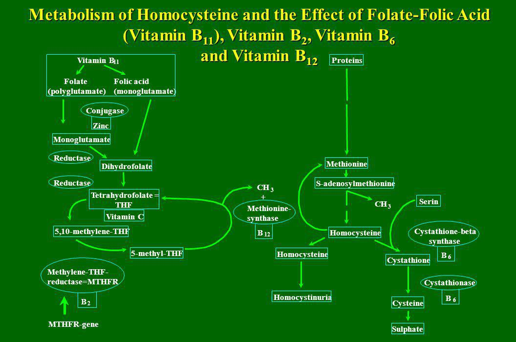 Metabolism of Homocysteine and the Effect of Folate-Folic Acid (Vitamin B 11 ), Vitamin B 2, Vitamin B 6 and Vitamin B 12