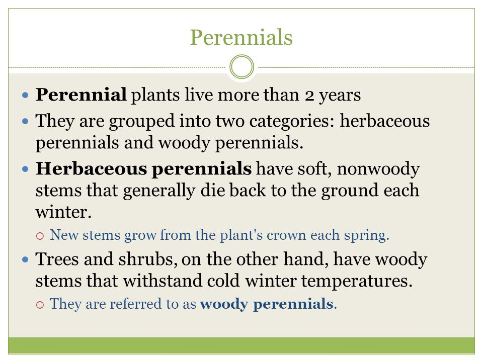 Perennials Perennial plants live more than 2 years They are grouped into two categories: herbaceous perennials and woody perennials. Herbaceous perenn