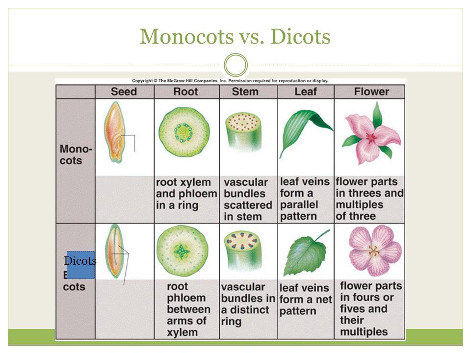 Monocots vs. Dicots Dicots