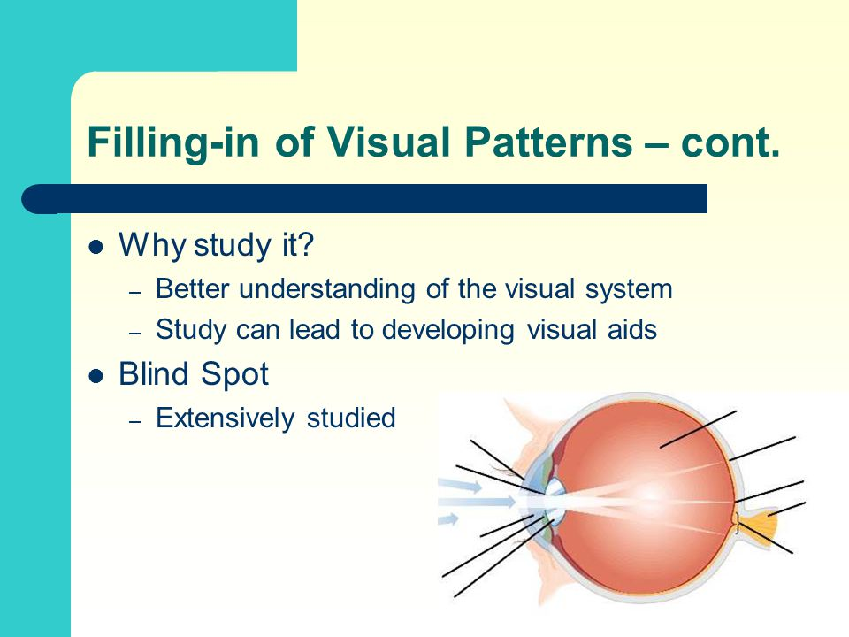 Filling-in of Visual Patterns – cont. Why study it? – Better understanding of the visual system – Study can lead to developing visual aids Blind Spot