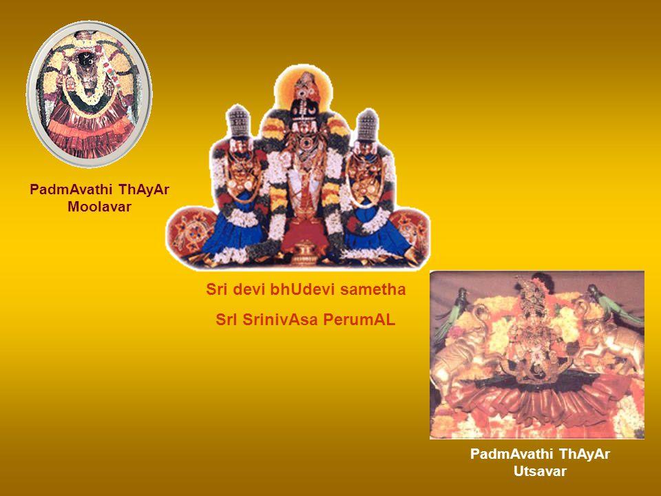 The Grand Finale – Sri SrinivAsa ThirukkalyANam namO SrI VenkatEsAya! namO SrI SrInivAsAya! SrI PadmAvathi ThAyAr sametha Sri SrInivAsa PerumAL Thiruv