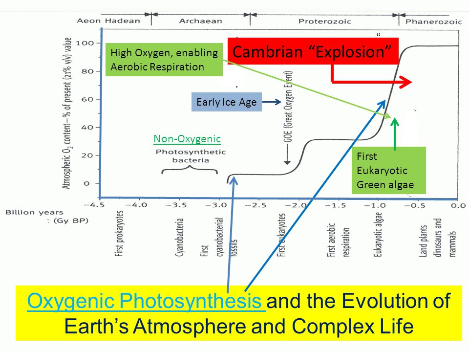 IIIiIIIi Oxygenic Photosynthesis and the Evolution of Earth's Atmosphere and Complex Life Early Ice Age First First Cambrian Explosion Non-Oxygenic First Eukaryotic Green algae High Oxygen, enabling Aerobic Respiration