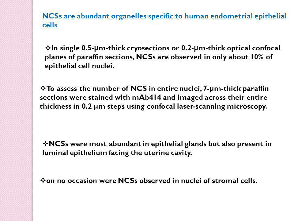 NCSs are abundant organelles specific to human endometrial epithelial cells  In single 0.5- μ m-thick cryosections or 0.2- μ m-thick optical confocal planes of paraffin sections, NCSs are observed in only about 10% of epithelial cell nuclei.