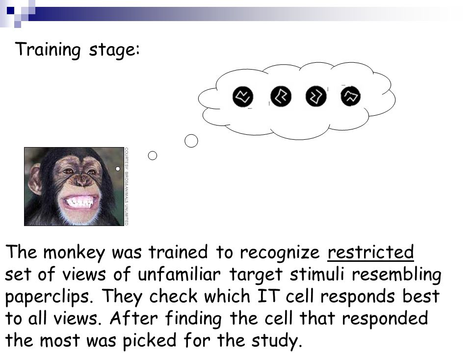 Training stage: The monkey was trained to recognize restricted set of views of unfamiliar target stimuli resembling paperclips. They check which IT ce