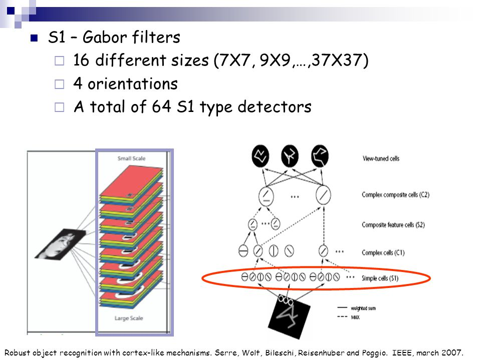 S1 – Gabor filters  16 different sizes (7X7, 9X9,…,37X37)  4 orientations  A total of 64 S1 type detectors Robust object recognition with cortex-li