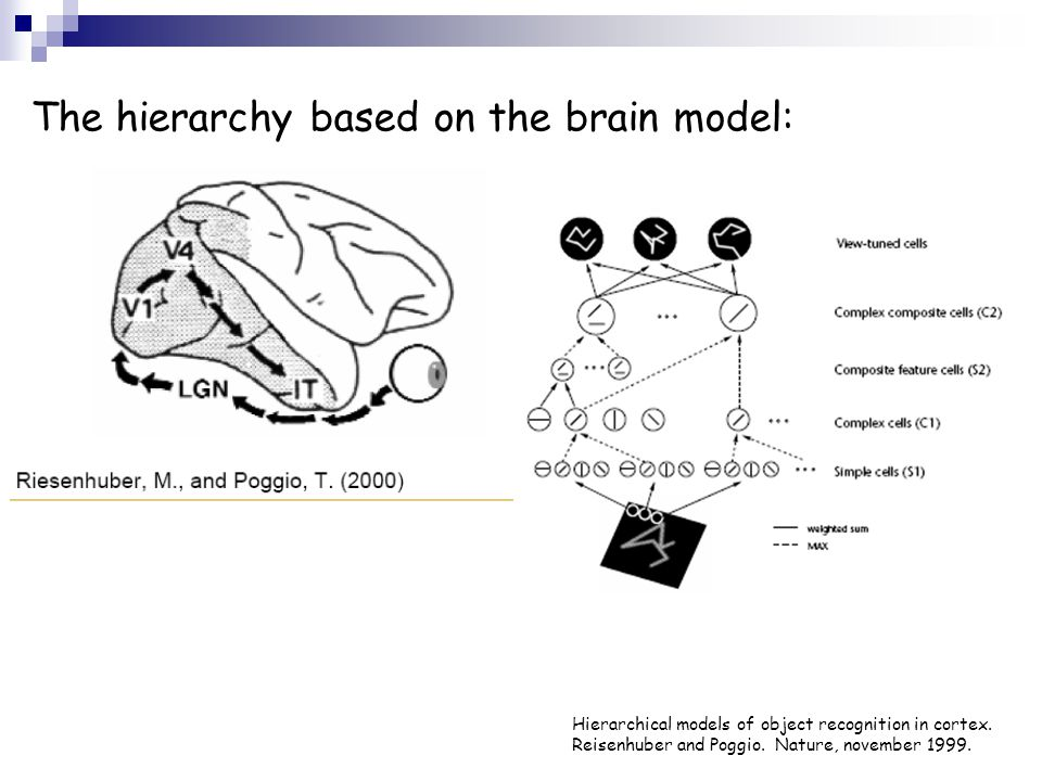 The hierarchy based on the brain model: Hierarchical models of object recognition in cortex. Reisenhuber and Poggio. Nature, november 1999.