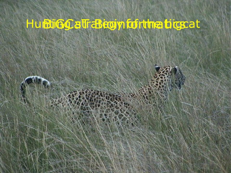 BiGCaT Bioinformatics Hunting strategy of the bigcat