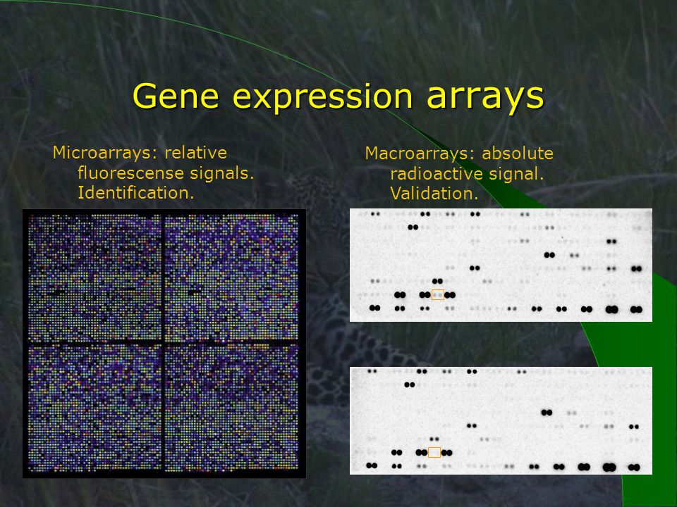 Gene expression arrays Microarrays: relative fluorescense signals.