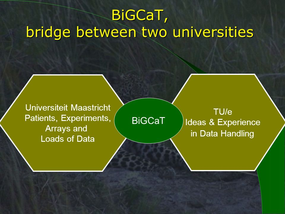 BiGCaT, bridge between two universities Universiteit Maastricht Patients, Experiments, Arrays and Loads of Data TU/e Ideas & Experience in Data Handling BiGCaT