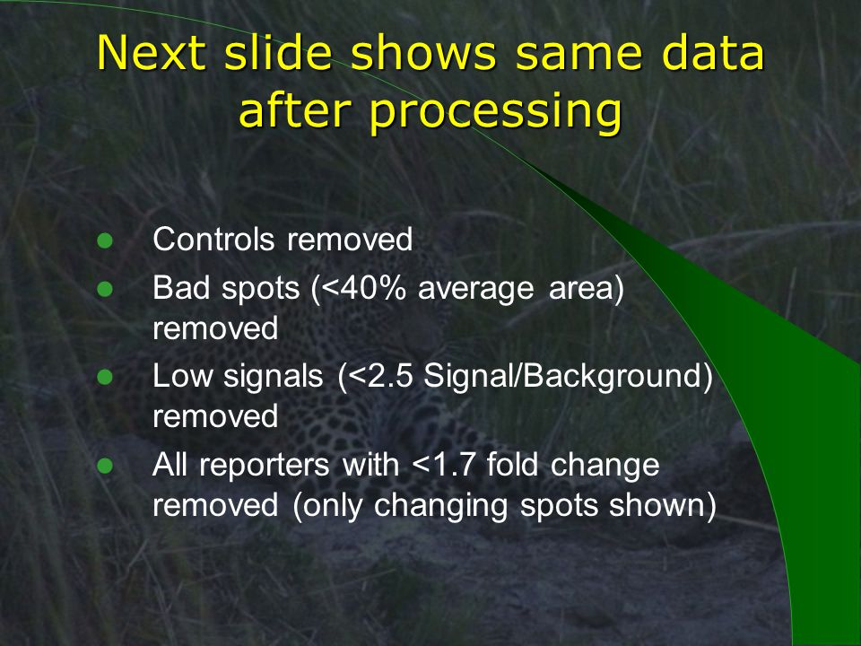 Next slide shows same data after processing Controls removed Bad spots (<40% average area) removed Low signals (<2.5 Signal/Background) removed All reporters with <1.7 fold change removed (only changing spots shown)