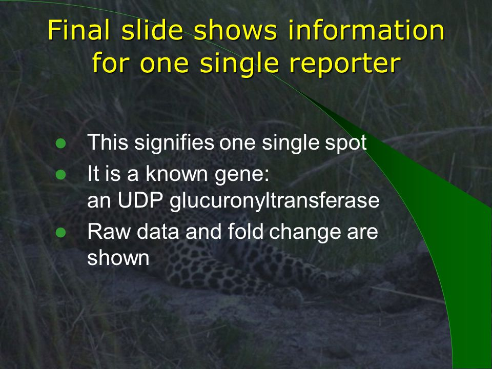 Final slide shows information for one single reporter This signifies one single spot It is a known gene: an UDP glucuronyltransferase Raw data and fold change are shown