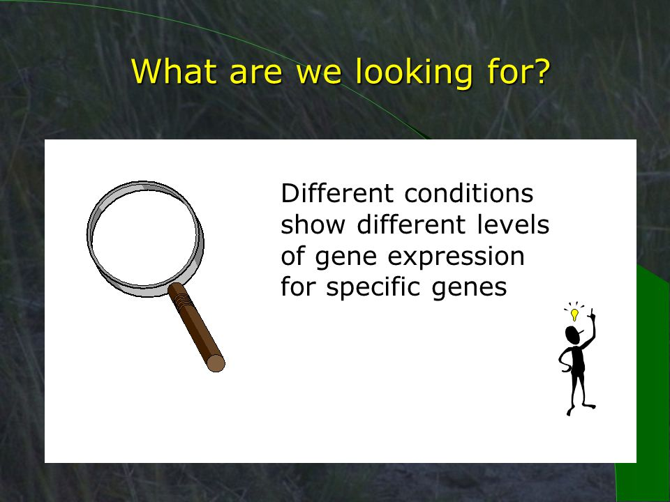 Differences in gene expression.