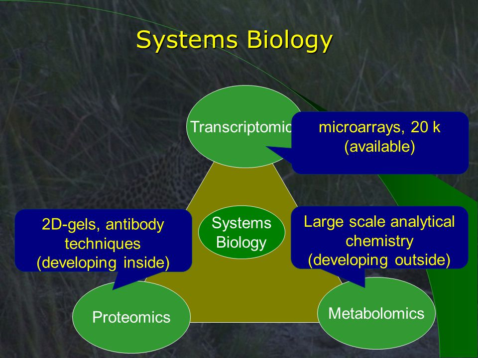 Systems Biology Transcriptomics Metabolomics Proteomics microarrays, 20 k (available) Large scale analytical chemistry (developing outside) 2D-gels, antibody techniques (developing inside)