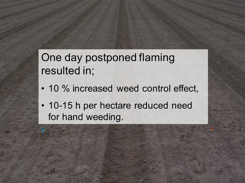 Område Jordbruk - odlingssystem, teknik och produktkvalitet www.slu.se David Hansson 2007-11-29 One day postponed flaming resulted in; 10 % increased weed control effect, 10-15 h per hectare reduced need for hand weeding.