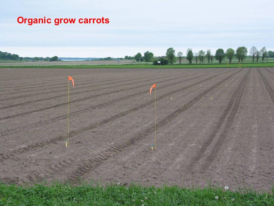 Område Jordbruk - odlingssystem, teknik och produktkvalitet www.slu.se David Hansson 2007-11-29 Organic grow carrots