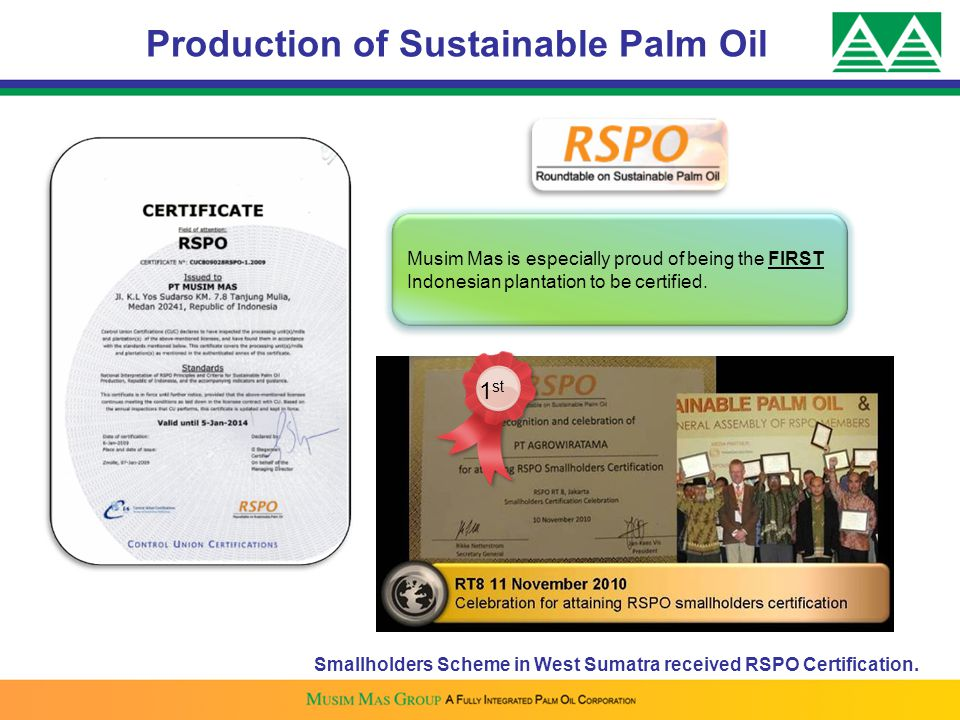 Production of Sustainable Palm Oil Musim Mas is especially proud of being the FIRST Indonesian plantation to be certified. 1 st Smallholders Scheme in