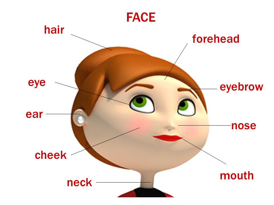 FACE hair eye ear neck mouth nose forehead eyebrow cheek