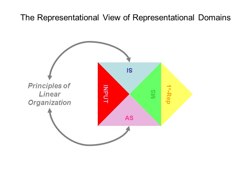 The Representational View of Representational Domains AS SI MS 1 o -Rep INPUT Principles of Linear Organization