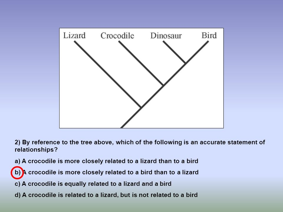 2) By reference to the tree above, which of the following is an accurate statement of relationships? a) A crocodile is more closely related to a lizar