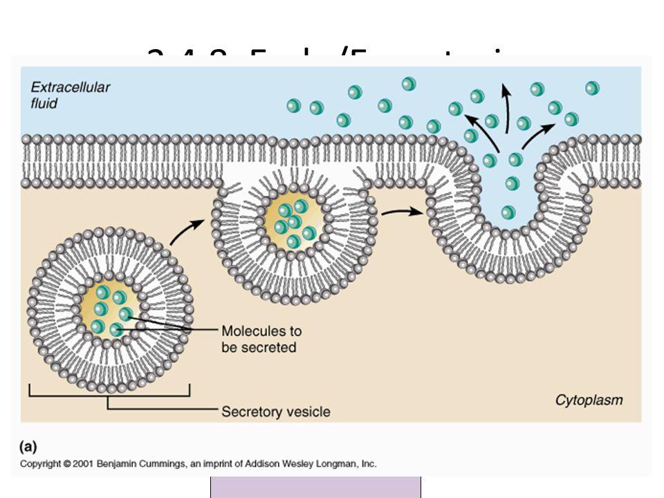 2.4.8: Endo/Exocytosis