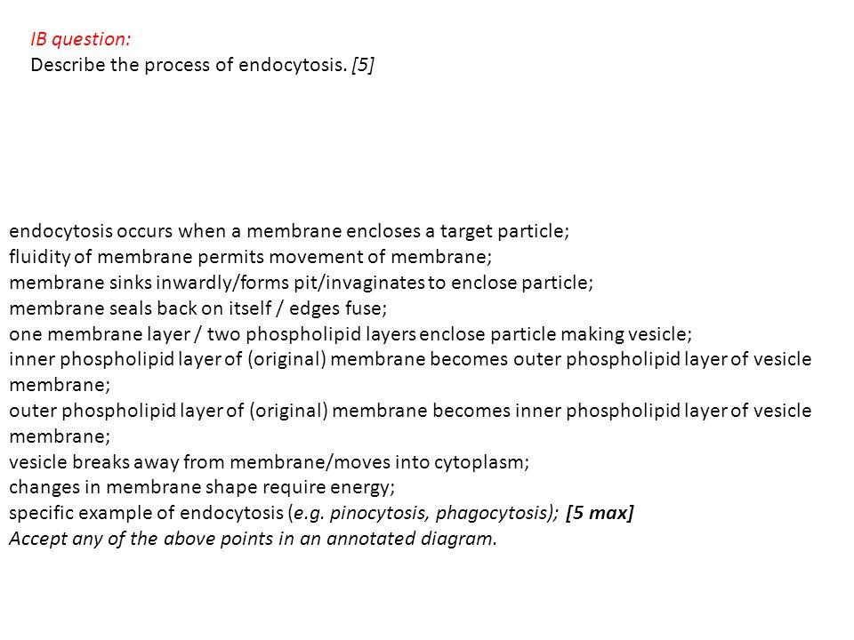 IB question: Describe the process of endocytosis.