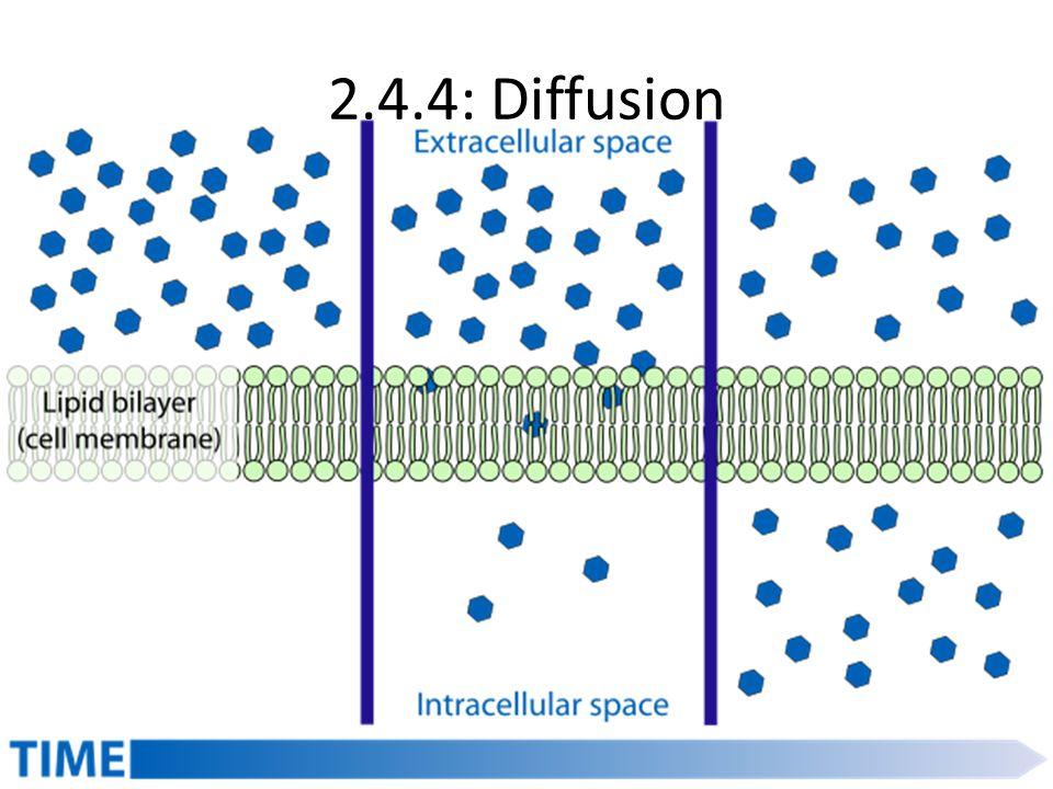 2.4.4: Diffusion