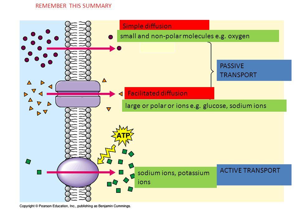 Simple diffusion REMEMBER THIS SUMMARY small and non-polar molecules e.g.