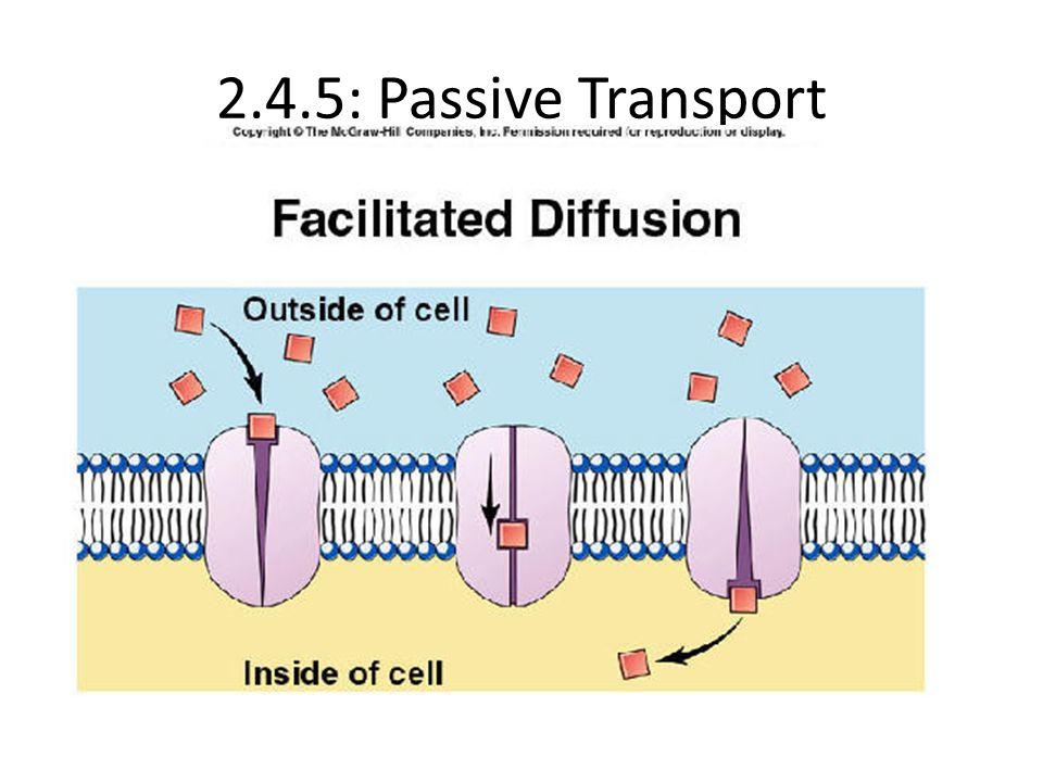 2.4.5: Passive Transport