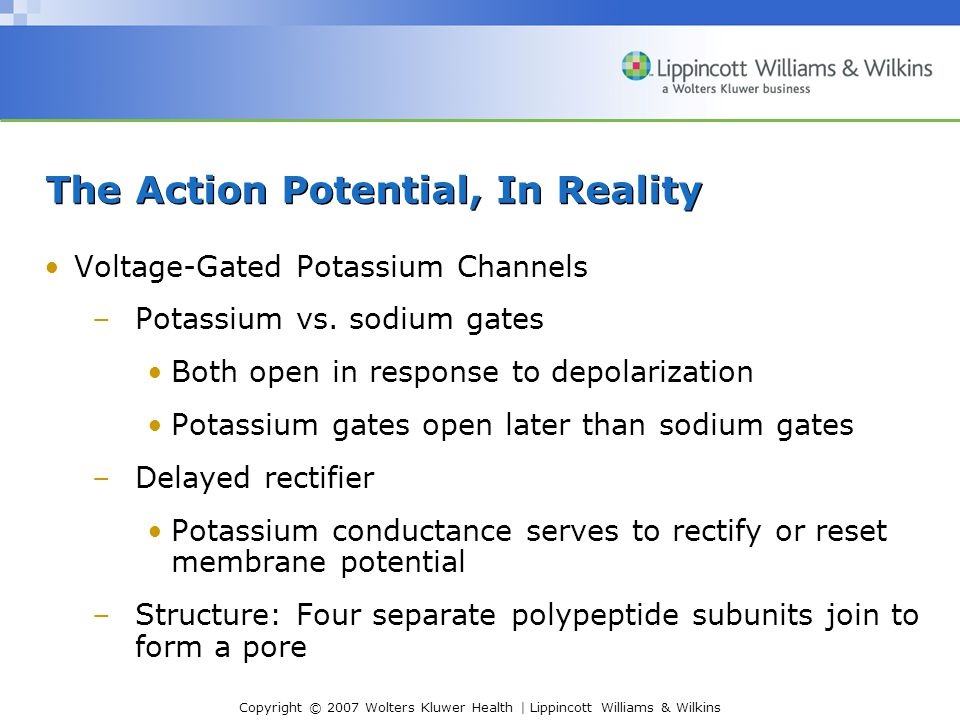 Copyright © 2007 Wolters Kluwer Health | Lippincott Williams & Wilkins The Action Potential, In Reality Voltage-Gated Potassium Channels –Potassium vs