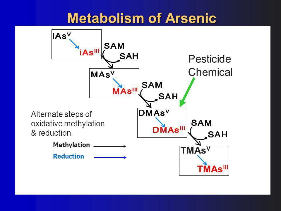 TMAs III TMAs V Methylation Reduction Metabolism of Arsenic Alternate steps of oxidative methylation & reduction Pesticide Chemical