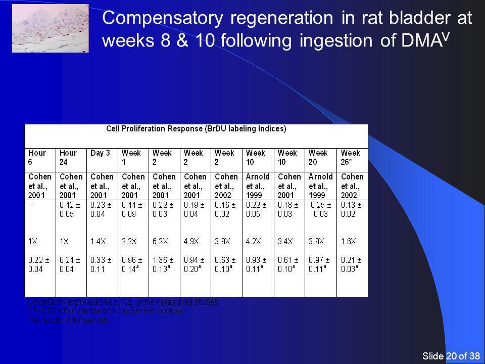 Slide 20 of 38 Compensatory regeneration in rat bladder at weeks 8 & 10 following ingestion of DMA V