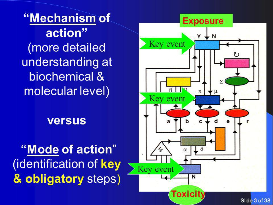 Slide 3 of 38 Mechanism of action (more detailed understanding at biochemical & molecular level) versus Mode of action (identification of key & obligatory steps) Exposure Toxicity Key event