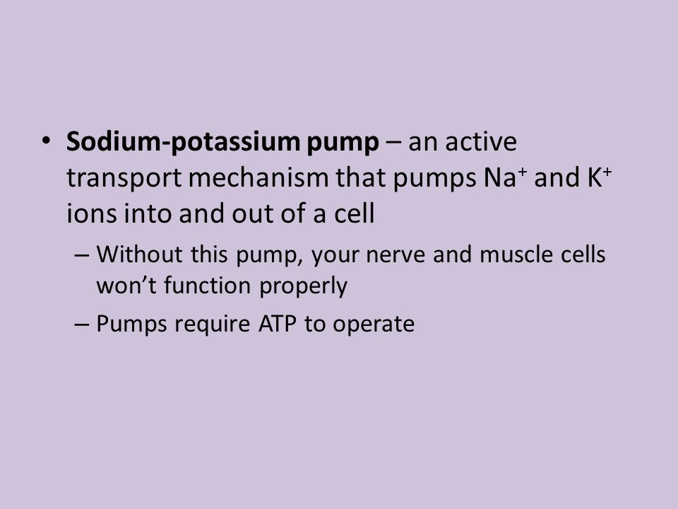 Sodium-potassium pump – an active transport mechanism that pumps Na + and K + ions into and out of a cell – Without this pump, your nerve and muscle c