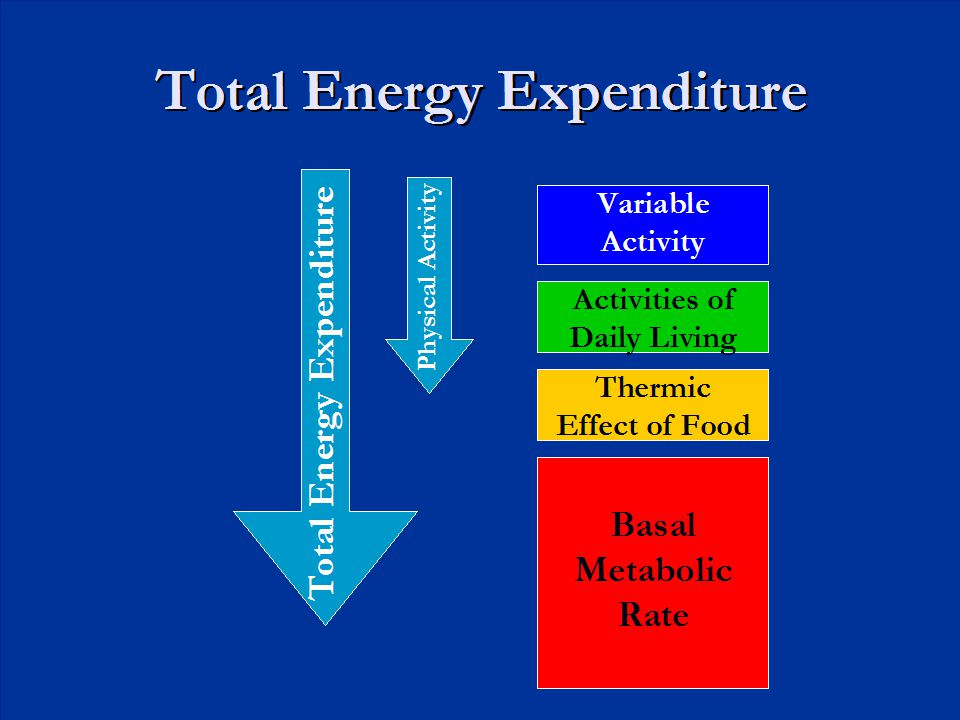 Total Energy Expenditure Basal Metabolic Rate Thermic Effect of Food Activities of Daily Living Variable Activity Total Energy Expenditure Physical Ac