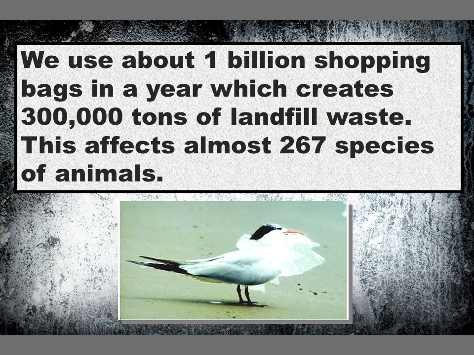 We use about 1 billion shopping bags in a year which creates 300,000 tons of landfill waste.