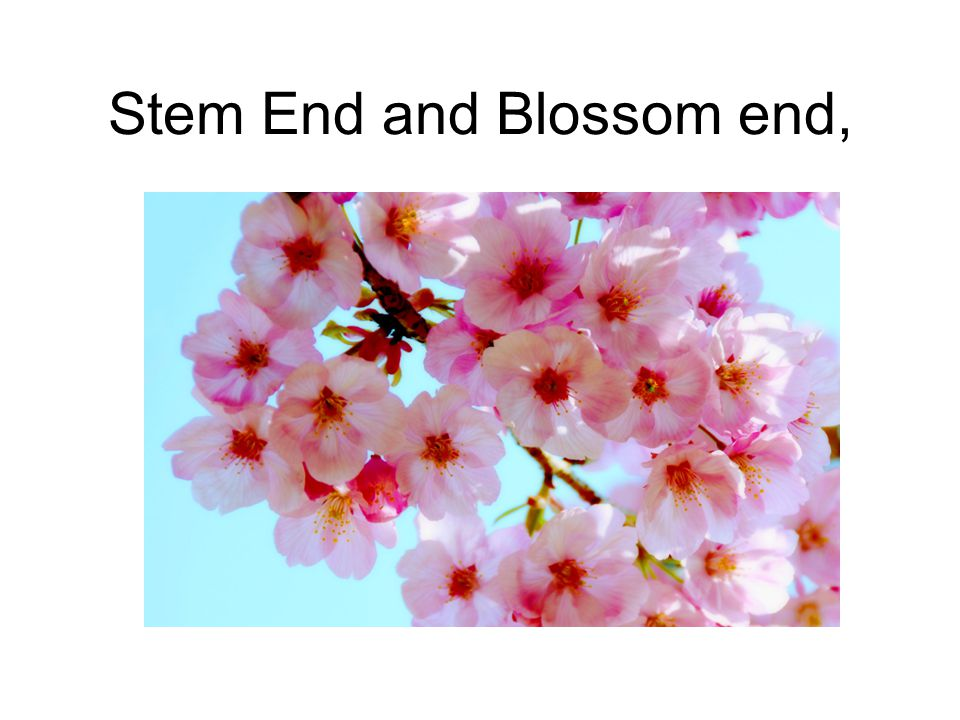 Stem End and Blossom end,