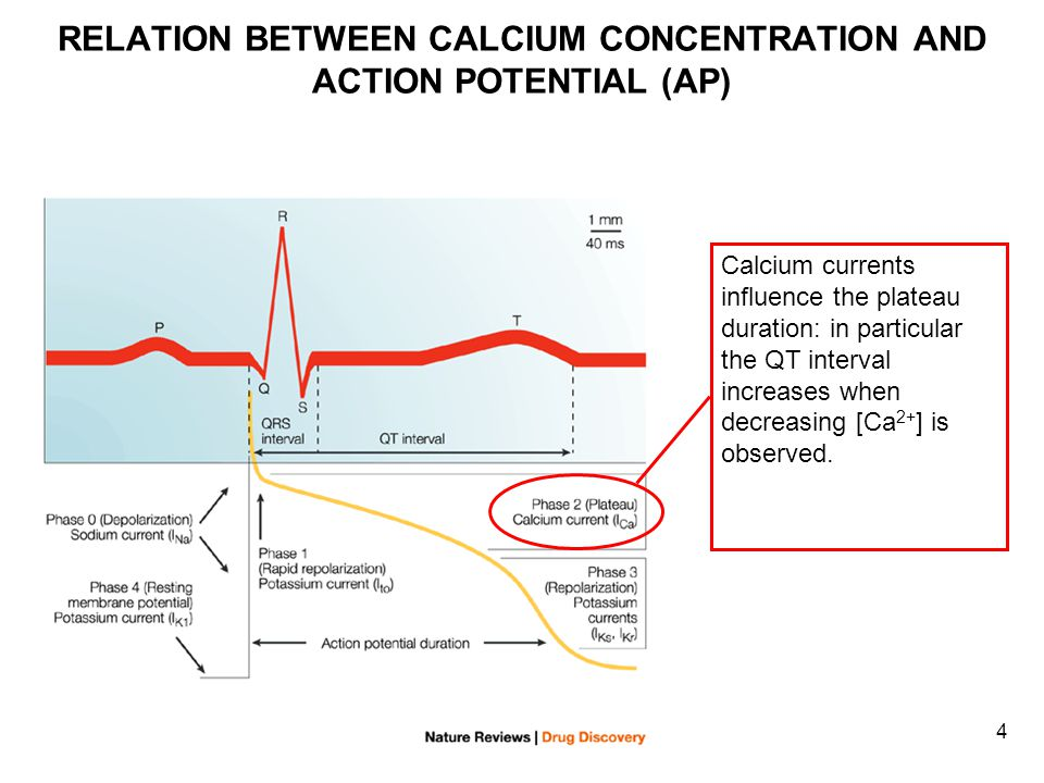 4 RELATION BETWEEN CALCIUM CONCENTRATION AND ACTION POTENTIAL (AP) Calcium currents influence the plateau duration: in particular the QT interval increases when decreasing [Ca 2+ ] is observed.