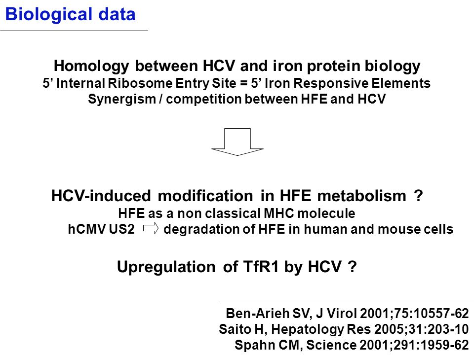 Biological data Homology between HCV and iron protein biology 5' Internal Ribosome Entry Site = 5' Iron Responsive Elements Synergism / competition be