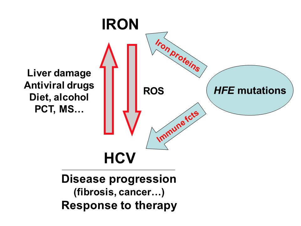 IRON HCV Liver damage Antiviral drugs Diet, alcohol PCT, MS… ROS Disease progression (fibrosis, cancer…) Response to therapy HFE mutations Iron protei