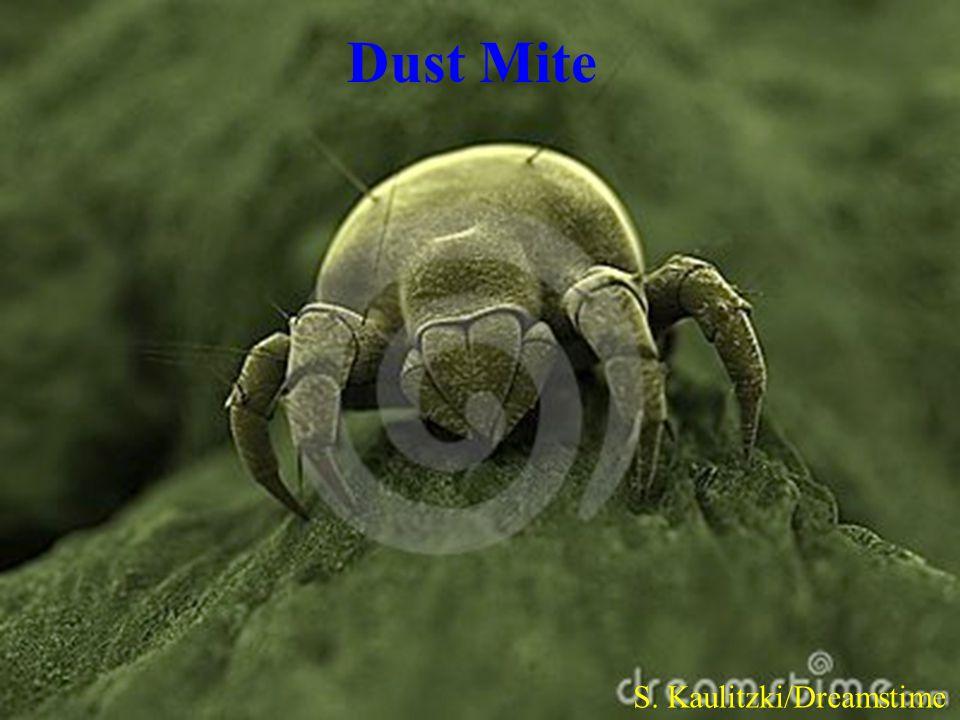 Dust Mite S. Kaulitzki/Dreamstime