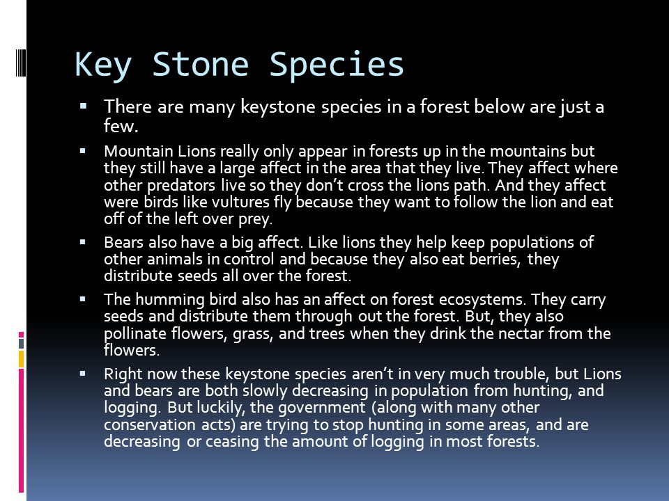 Key Stone Species  There are many keystone species in a forest below are just a few.